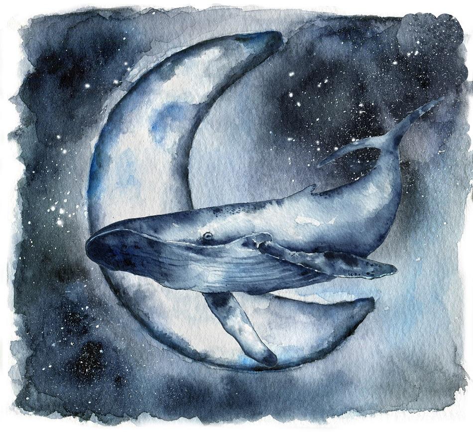 получилось меня картинки и рисунки китов выглядят
