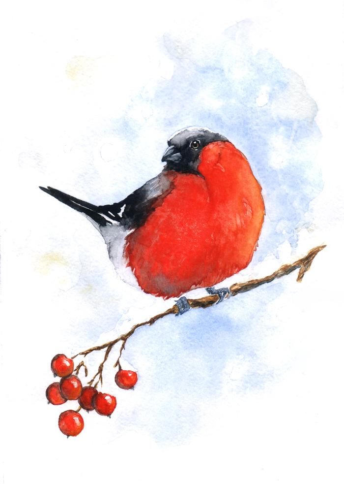 Картинки снегири зимой нарисованные, год мальчику