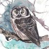 User illustration thumb owl