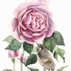User illustration thumb rose i solovey 2
