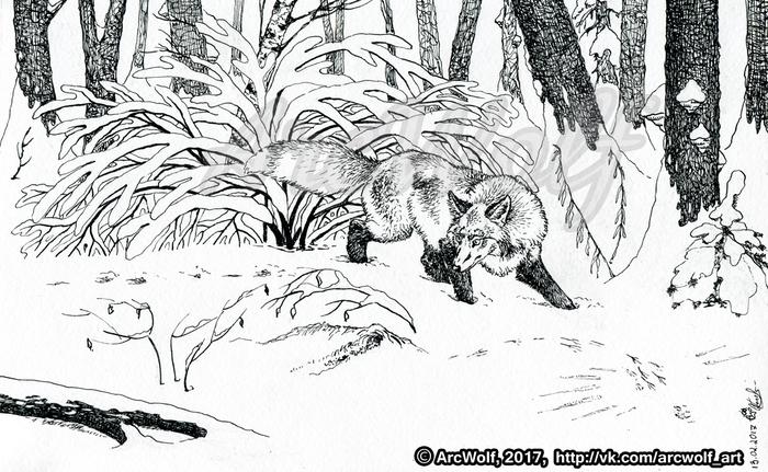 Раскраска нора лисы