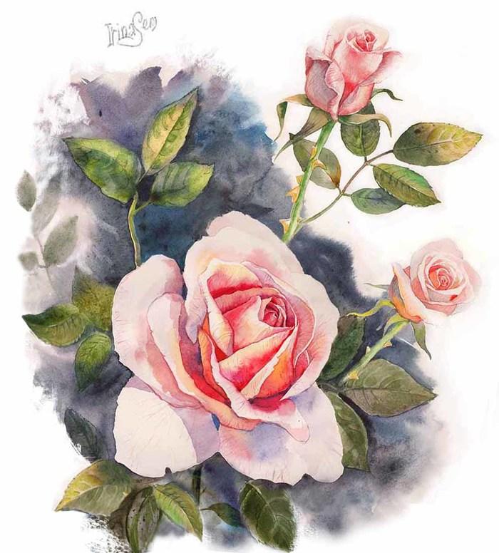 Открытки рисованные розы, надписью истории