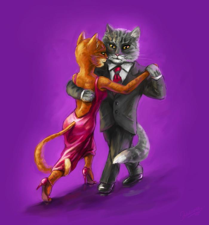 танго котики