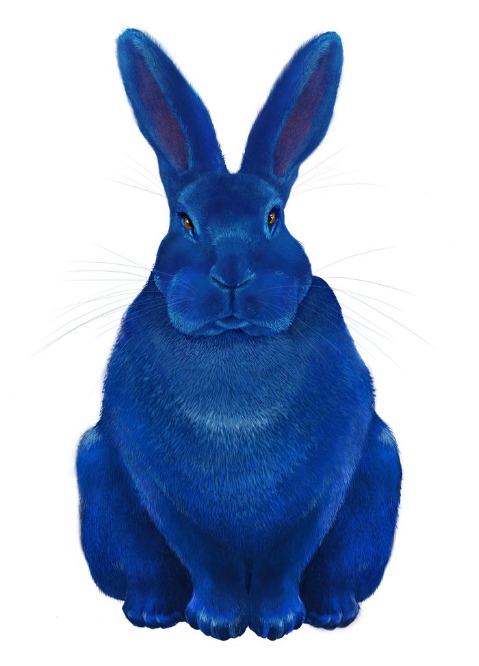 синий зайка картинки наш портал
