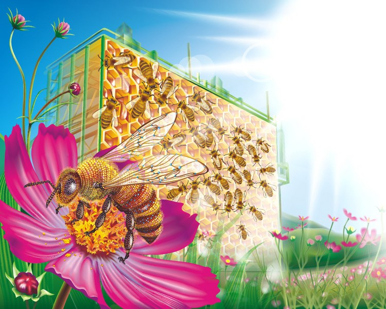 соты, цветы, Пчела картинки на рабочий стол.