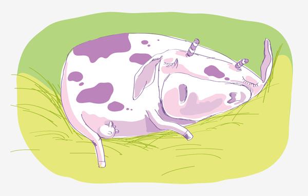 Мультяшные картинки спящих коров