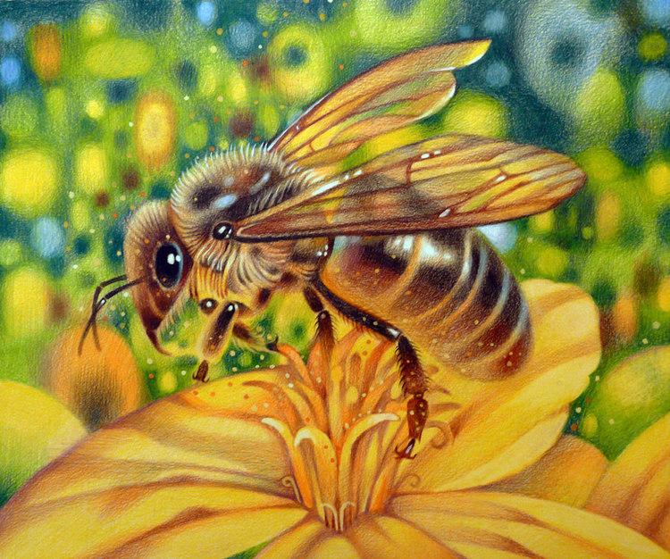 """Оригинал схемы вышивки  """"Пчелка """".  Пчелка, насекомое, пчела, пчелка, цветок."""