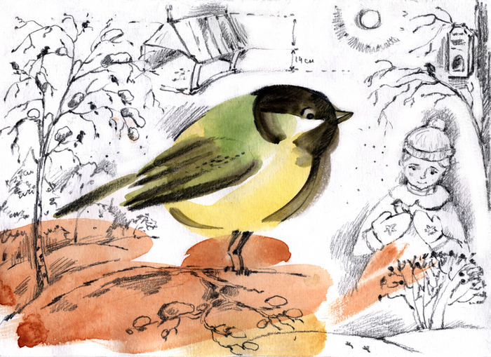 Днем рождения, картинки покормите птиц зимой для детей