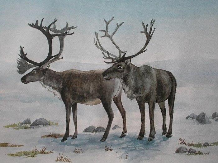 картинки северных оленях рисовать