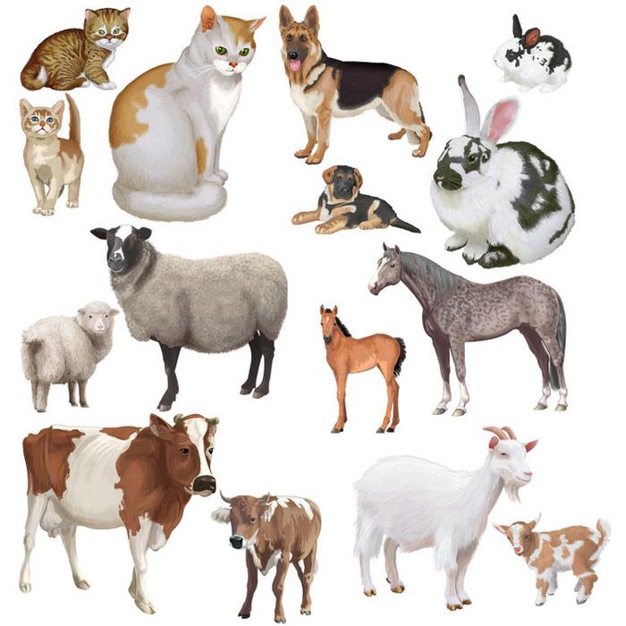 Картинки домашних животных и диких животных