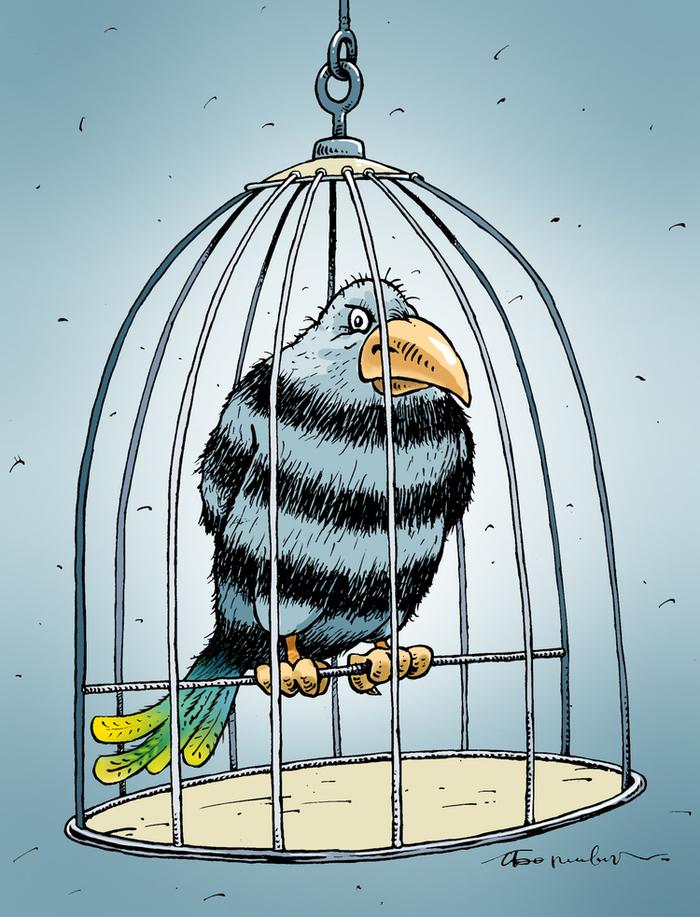 Открытку день, рисунок смешной попугай