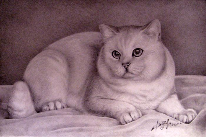 Всевышнего, картинки британских кошек для срисовки
