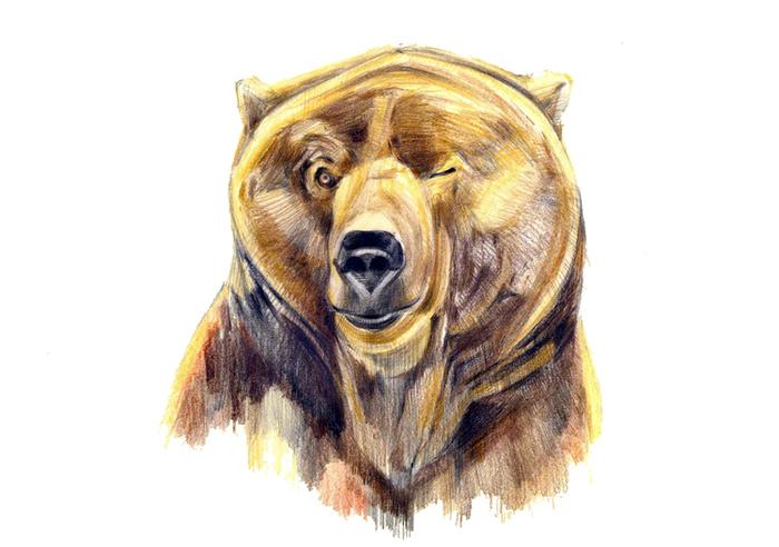 путешественников, картинка медведь подмигивает сделать метки, разделяющие