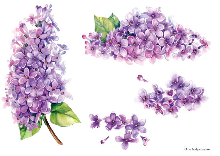 300x212 крестов.  11. Марка нитей.  Мини-вышивки Сирень. poltanya1. цветы. весенние цветы.