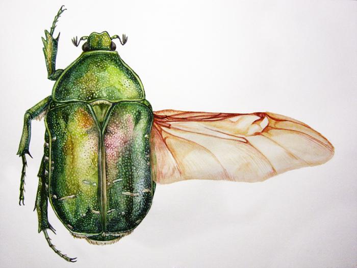 про красивые рисунки жуков имеет еще одно