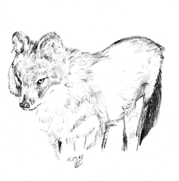 Рисунок красный волк из красной книги