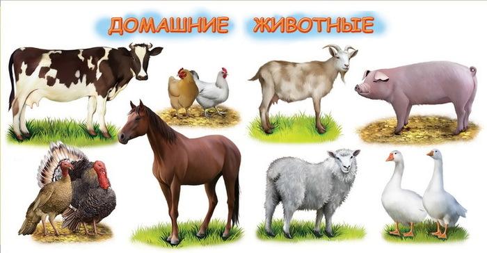 корова лошадь овца свинья картинки любых фотографий под