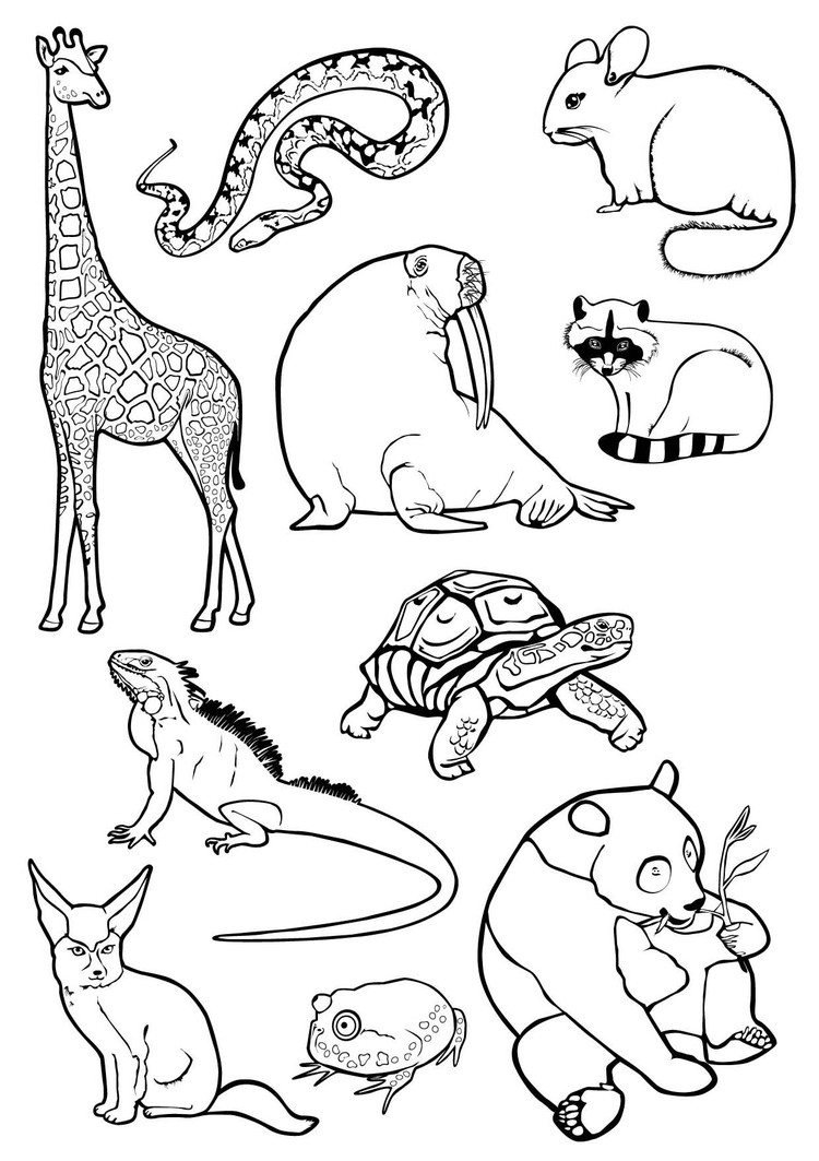 животные графика: