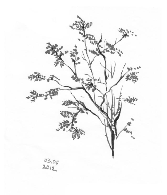 раскраска рябина дерево спелеошколы сгс