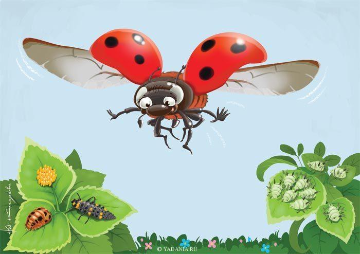 смотровой картинка жук летит к цветку нас семье бюджет