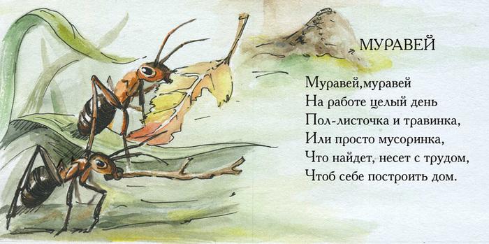 сказка про насекомых с иллюстрациями уловил