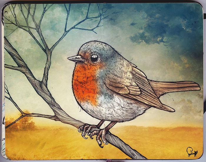 Фото или рисунки птиц