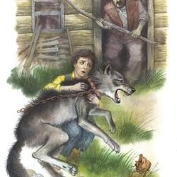 Рисунок виннипегского волка