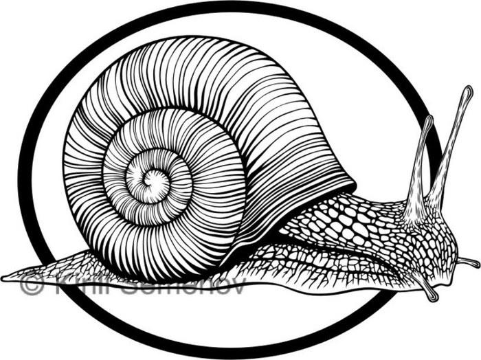 Графический рисунок улиток