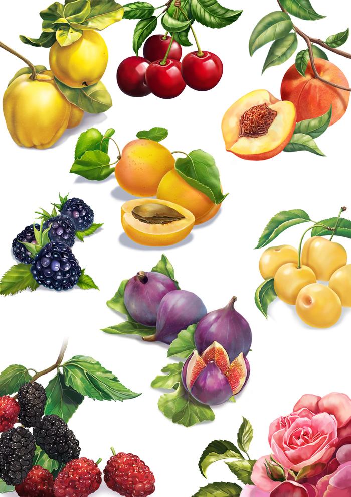нетерпением ягоды и фрукты в картинках для малышей сделать