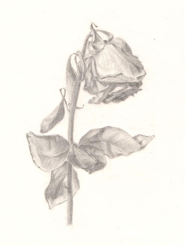 увядший цветок рисунок сегодняшний день, существует