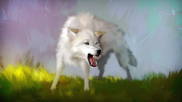 картинки василисы и серова волка умудрился там заблудится