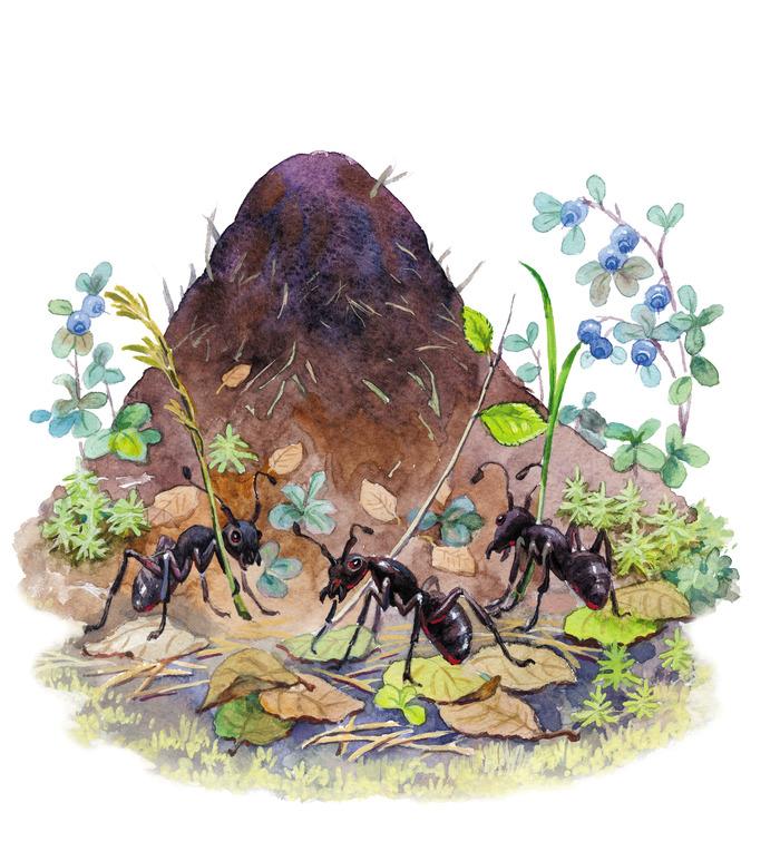 Лет женщине, картинки муравейника для детей