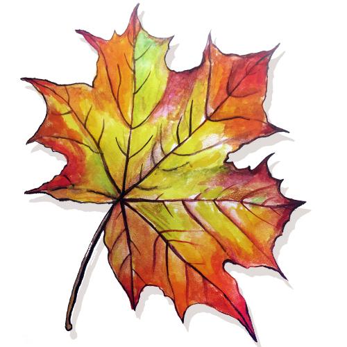 Рисунки кленовых листьев красками