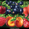 User illustration thumb berries