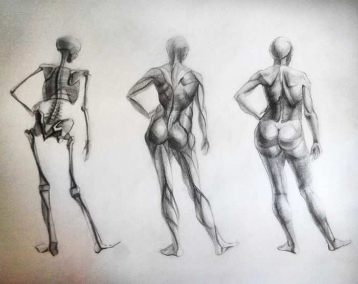 Академический рисунок женской фигуры