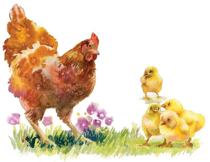 Картинка курица с цыплятами, открытки для