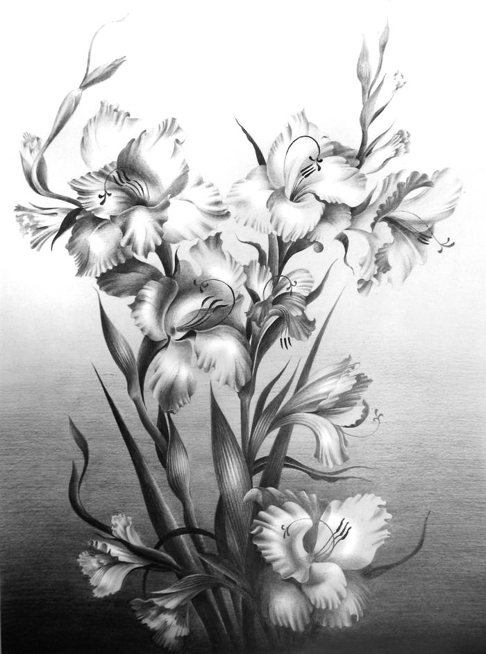 Прикольная марта, картинки гладиолусов карандашом