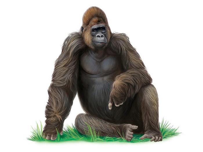 строить картинка гориллы на белом фоне саму актрису